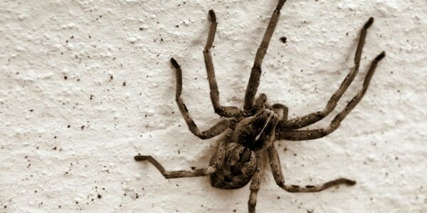 Large spider on wall