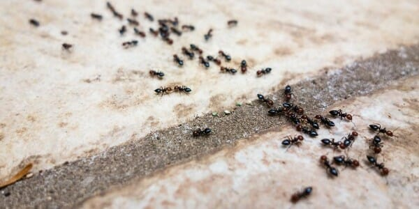 Ants crawling on concrete