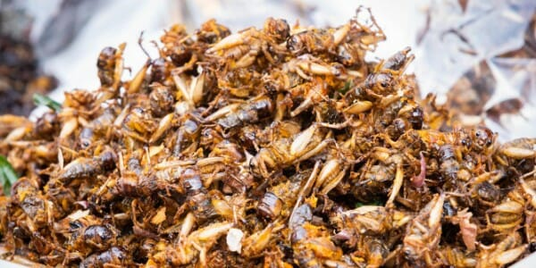 Plate of fried crickets