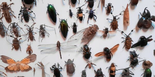 Variety of insects laid out on a flat white surface