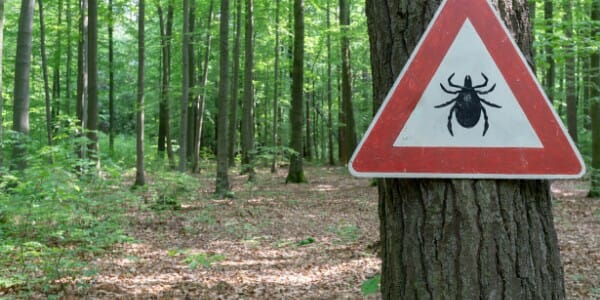Wooded area with tick warning sign