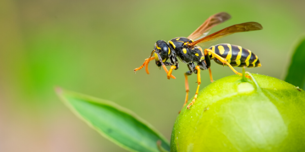 wasp outside on green plant