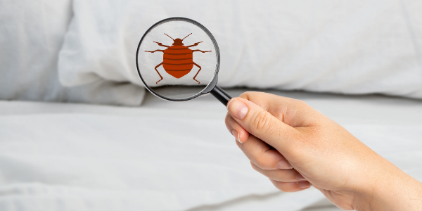 Hand holding magnifying glass to bed looking for bed bugs