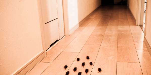 Group of cockroaches crawl in hallway