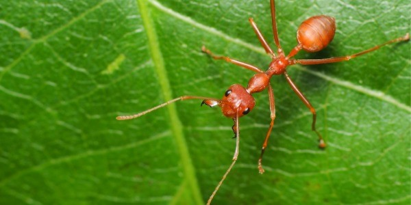natural insecticides for green pest control