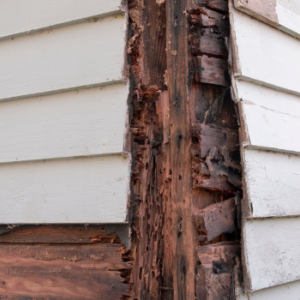 termite damage on home